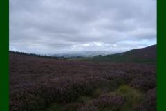 Northumberland19